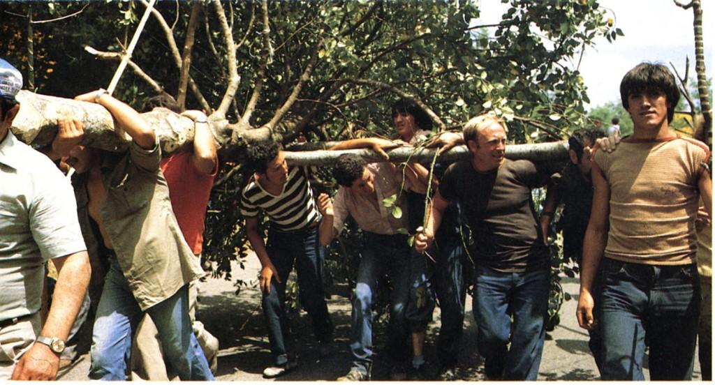 Corte del mejor árbol